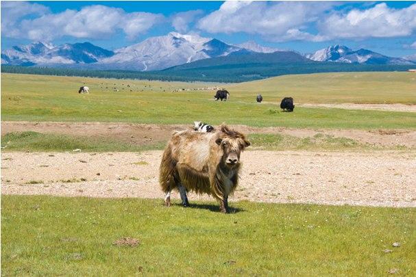 1 5 2 Монголия: путь от Хубсулуга до Улан Батора