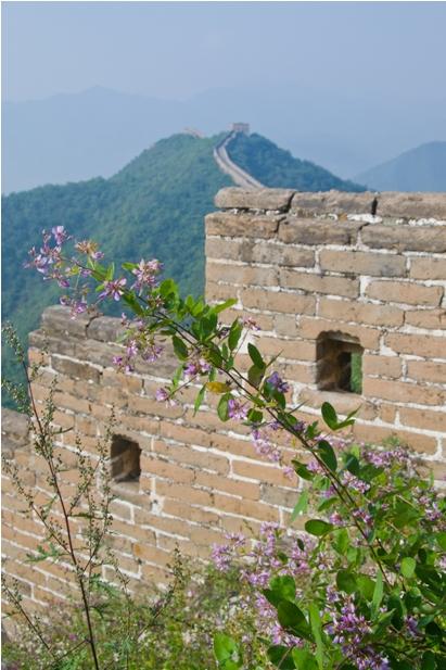 1DSC 1138 117 Великая Китайская Стена: как мы два дня жили на участке HuangHua