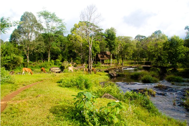 DSC 0122 Лаос: водопады на плато Болавен