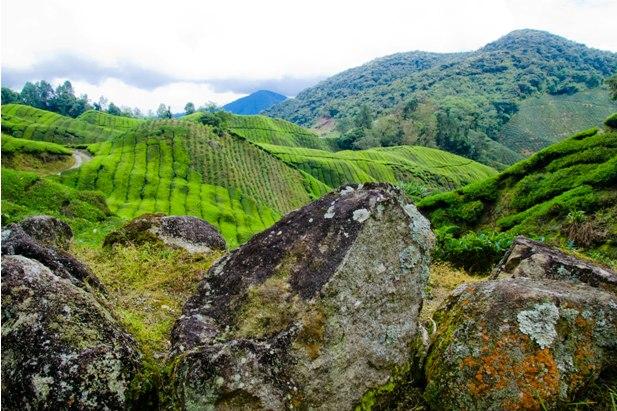 DSC 0647 Джунгли, горы и чайные плантации на Камерон Хайлендс