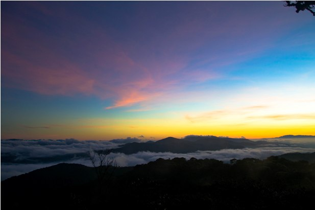 DSC 0683 Джунгли, горы и чайные плантации на Камерон Хайлендс