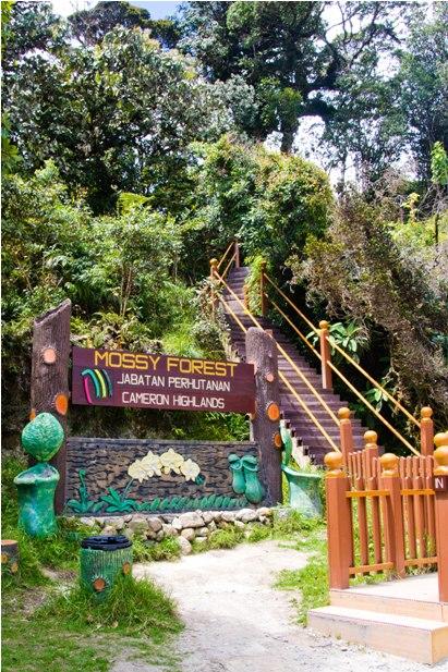 DSC 0710 Джунгли, горы и чайные плантации на Камерон Хайлендс