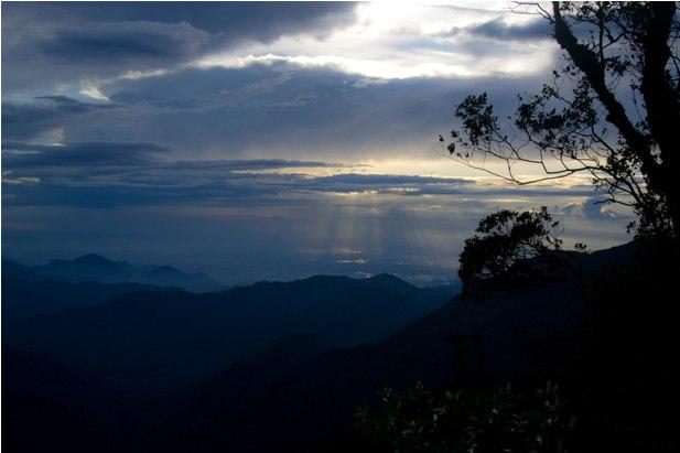 DSC 0730 Джунгли, горы и чайные плантации на Камерон Хайлендс