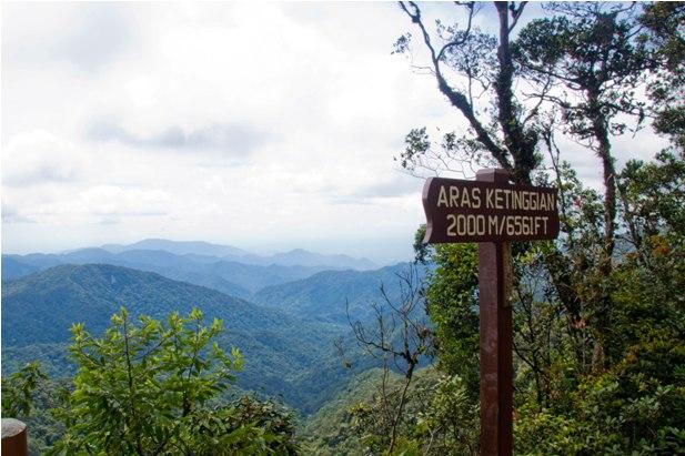 DSC 0746 Джунгли, горы и чайные плантации на Камерон Хайлендс