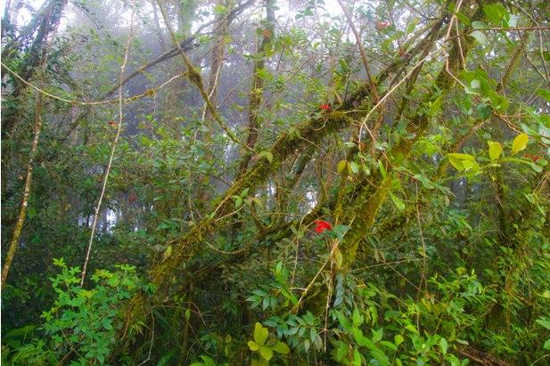 DSC 0770 Джунгли, горы и чайные плантации на Камерон Хайлендс