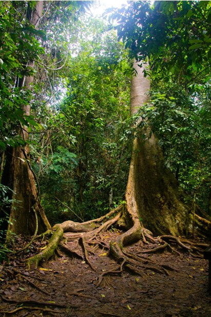DSC 0810 Национальный парк Таман Негара