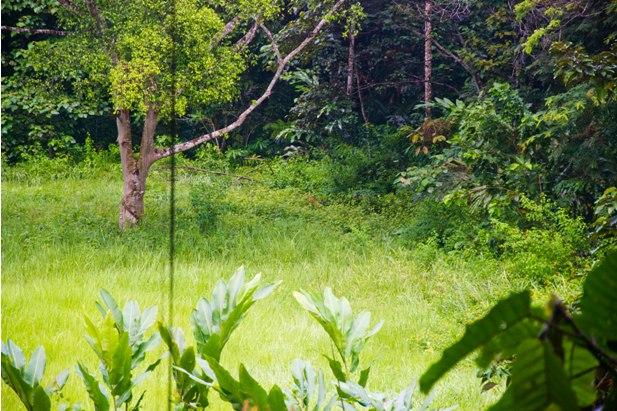 DSC 0816 Национальный парк Таман Негара