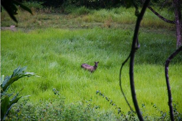 DSC 0834 Национальный парк Таман Негара