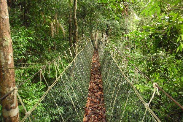 SAM 0083 Национальный парк Таман Негара