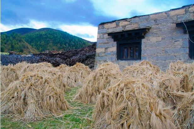 1DSC 0001 145 Наш путь к тибетцам (часть 3): Даоченг   Шангри Ла