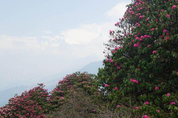 DSC 0024 Непал. Жизнь на треке (инструкция)