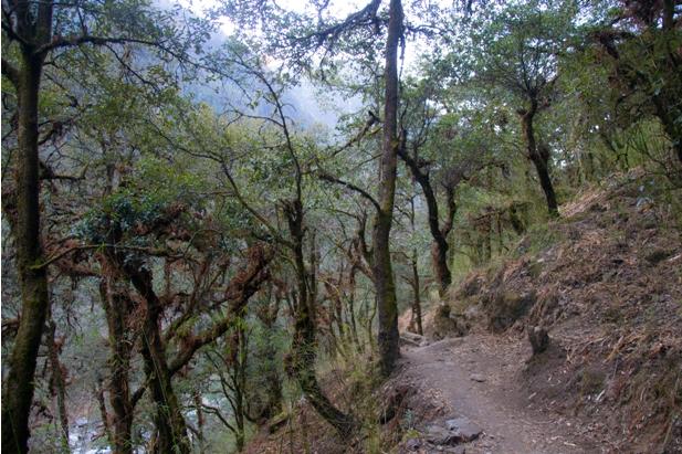 DSC 0073 Трек в Лангтанг (часть 5): Kyangien Gompa – Lama Hotel   Shyaphrupesi   Kathmandu