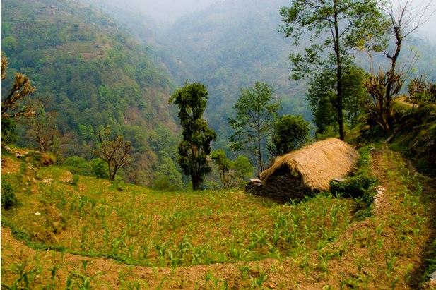 DSC 0074 2 Месяц на треке в районе Аннапурны (часть 7): Dobhan   ABC   Chomrong   Birethani   Pokhara