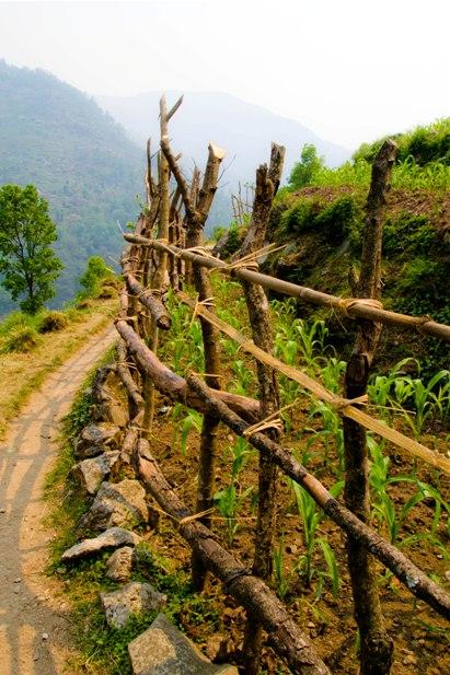 DSC 00751 Месяц на треке в районе Аннапурны (часть 7): Dobhan   ABC   Chomrong   Birethani   Pokhara