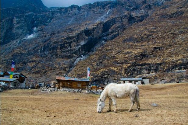 DSC 0114 Трек в Лангтанг (часть 2): Lama Hotel – Langtang