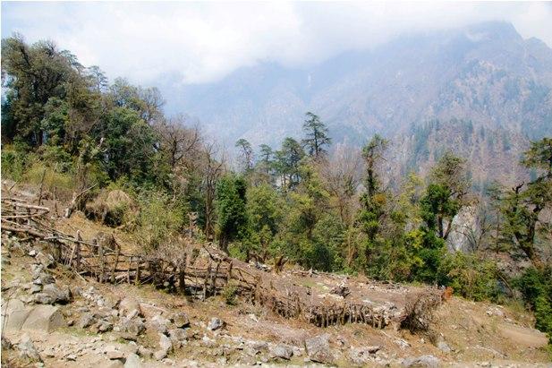 DSC 0155 Месяц на треке в районе Аннапурны (часть 1): Kathmandu   Nadi Bazar   Gagat   Bagarchhap   Timang