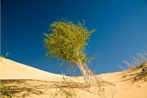 DSC 0819 Монгол Элс: пески и верблюды