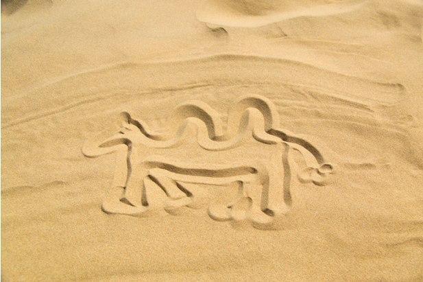 DSC 0835 Монгол Элс: пески и верблюды