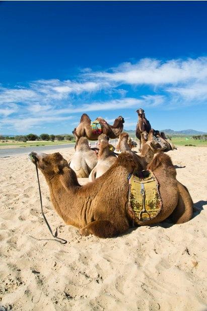 DSC 0862 Монгол Элс: пески и верблюды