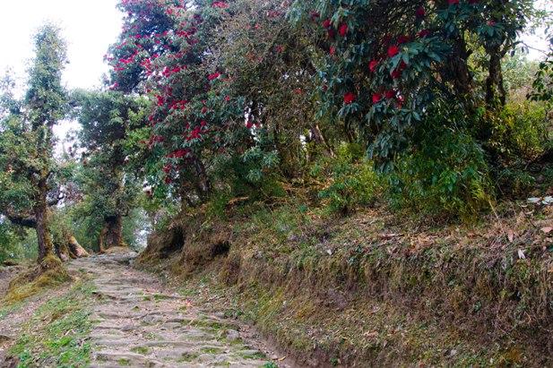 DSC 1179 Месяц на треке в районе Аннапурны (часть 6): Marpha   Tatopani   Ghorepani   Chomrong   Dobhan