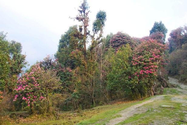 DSC 1186 Месяц на треке в районе Аннапурны (часть 6): Marpha   Tatopani   Ghorepani   Chomrong   Dobhan