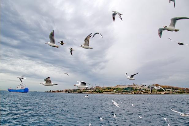 DSC 0190 1 614 Стамбул в картинках