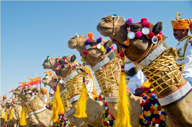 DSC 0077 Как прошел The Desert Festival в Джайсалмере