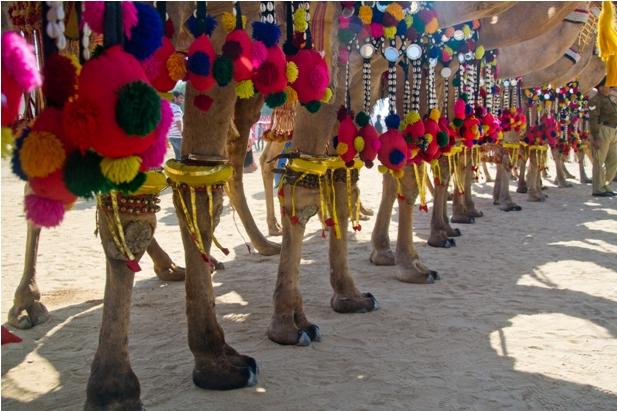 DSC 0082 2 Как прошел The Desert Festival в Джайсалмере