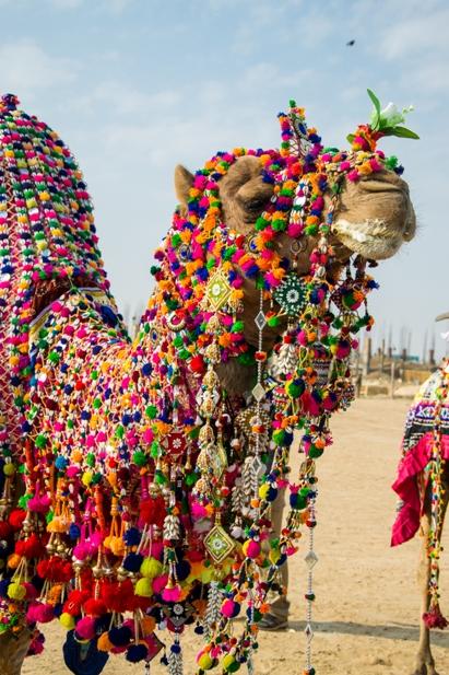 DSC 0147 Как прошел The Desert Festival в Джайсалмере