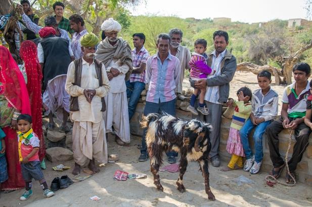 DSC 0477 Полдня в индийской деревне