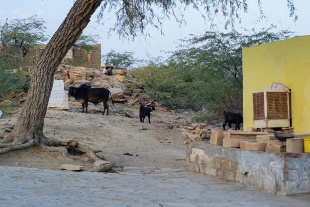 DSC 0580 Полдня в индийской деревне