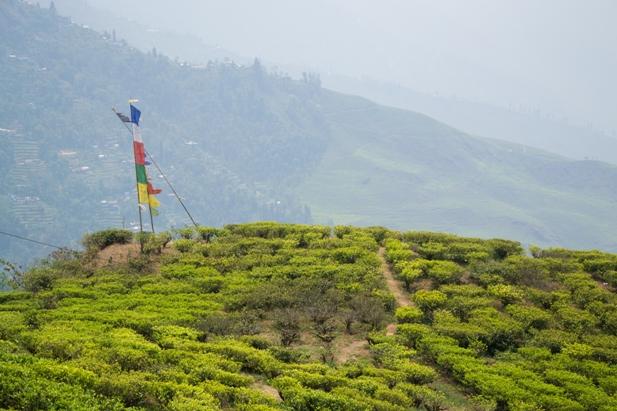 DSC 0596 Дарджилинг: чай, паровоз и музей Эвереста