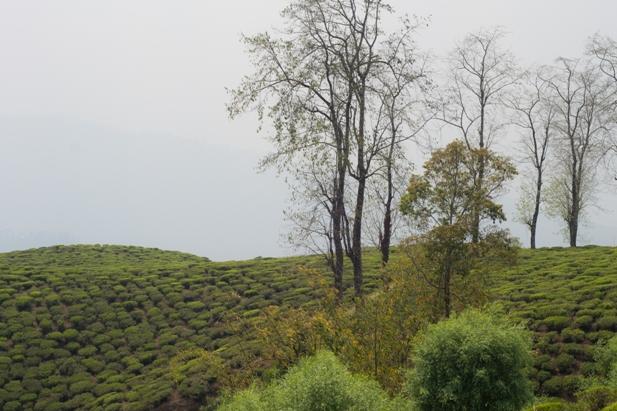 DSC 0601 Дарджилинг: чай, паровоз и музей Эвереста