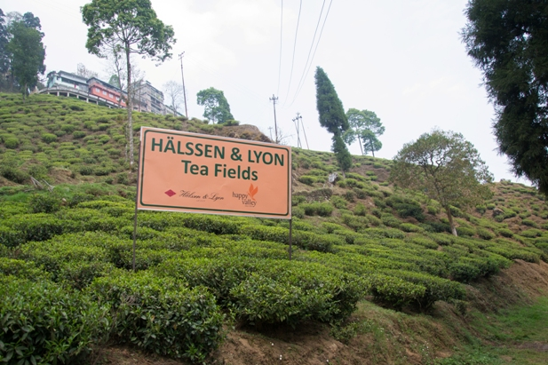 DSC 0612 Дарджилинг: чай, паровоз и музей Эвереста