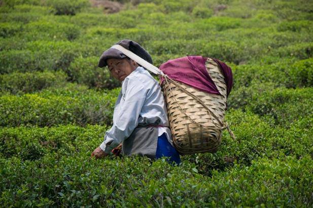 DSC 0620 Дарджилинг: чай, паровоз и музей Эвереста