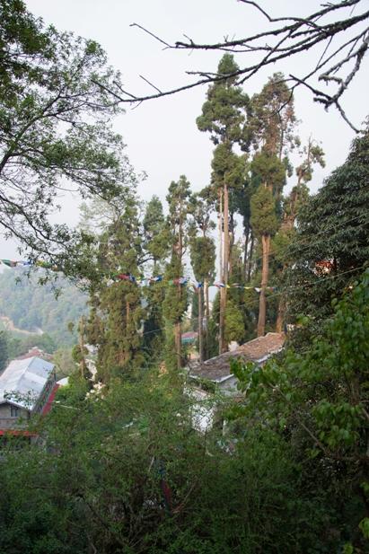 DSC 0630 Дарджилинг: чай, паровоз и музей Эвереста