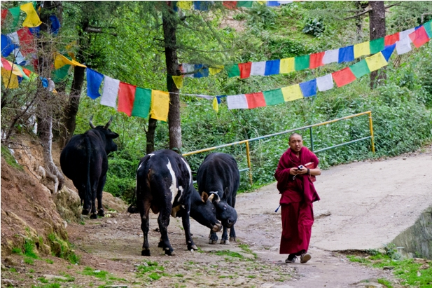 DSC 0739 Дарамсала и Маклеод Ганж: кусочек Тибета в Индии