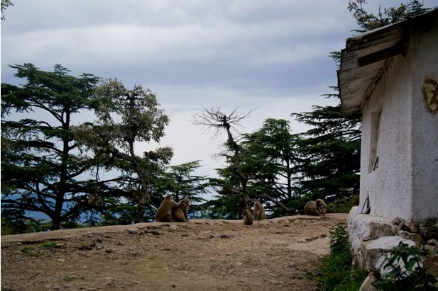 DSC 07401 Дарамсала и Маклеод Ганж: кусочек Тибета в Индии