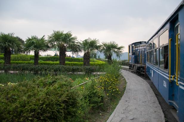 DSC 0751 Дарджилинг: чай, паровоз и музей Эвереста