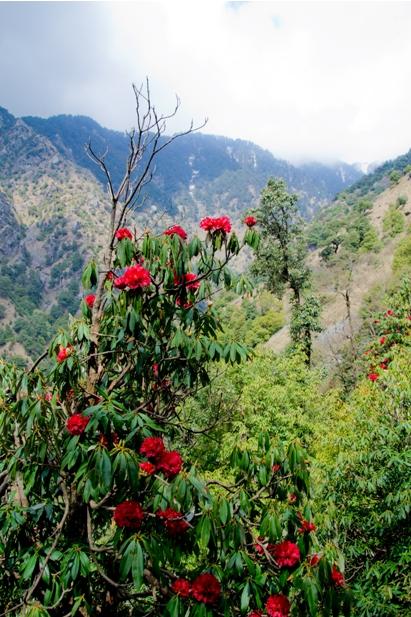 DSC 0795 Дарамсала и Маклеод Ганж: кусочек Тибета в Индии