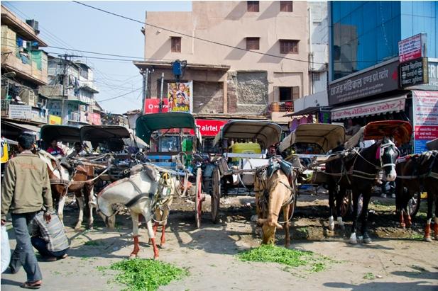 DSC 0016 Прогулки по Джодхпуру и окрестностям