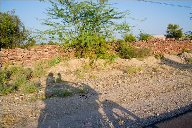 DSC 0061 Прогулки по Джодхпуру и окрестностям