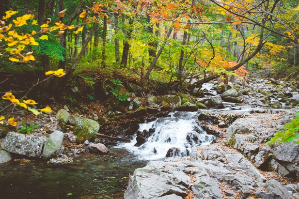 DSC 0030 Осеннее Приморье   водопады, Фалаза и кусочек моря