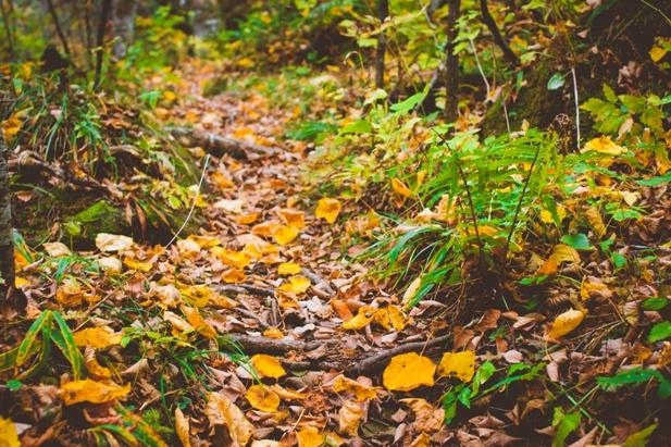 DSC 0049 Осеннее Приморье   водопады, Фалаза и кусочек моря