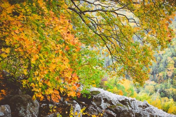 DSC 0059 Осеннее Приморье   водопады, Фалаза и кусочек моря