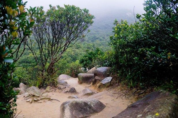 DSC09334 Гонконг. Продолжение