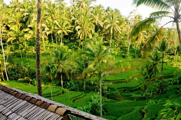 DSC01421 Рисовые террасы Тегаллаланг