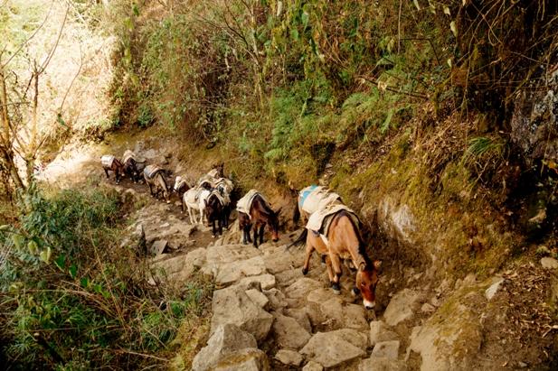 DSC03003 Трек к EBC: Katmandu   Lukla (часть 1)
