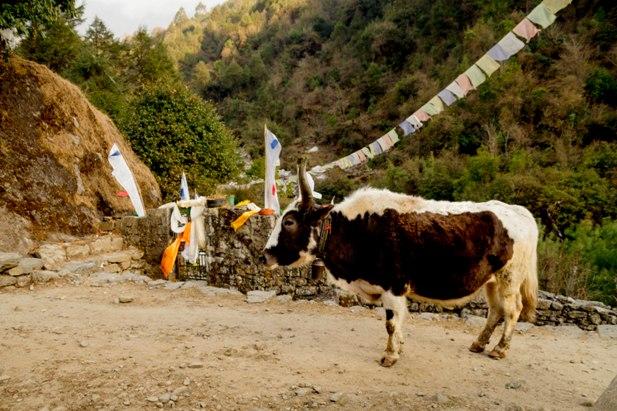 DSC03004 Трек к EBC: Katmandu   Lukla (часть 1)